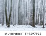 Broad Leaved Forest In The...