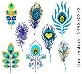 Peacock Feathers Vector...