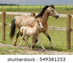 A Mare And Foal Trot Through A...