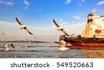 gulls fly together background...   Shutterstock . vector #549520663