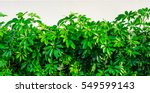 Shrubbery  Green Hedges...