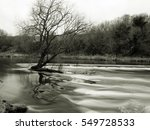 lone leafless tree in the river ... | Shutterstock . vector #549728533