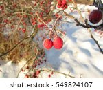Snow  Frost And Ice Crystals O...
