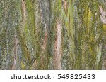 Tree Bark Texture. Nature Wood...