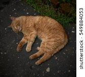 Red Cat Sleeps Like A Dead Man