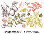 vector collection of hand drawn ... | Shutterstock .eps vector #549907003