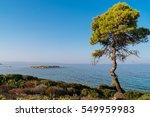 Small photo of Alone pine near the sea. Aegean sea coast landscape at sunset, Karidi beach, Vourvourou, Chalkidiki, Greece.