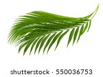 palm leaves isolated on white | Shutterstock . vector #550036753