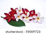 Plumeria flowers and leaf isolated on white background - stock photo