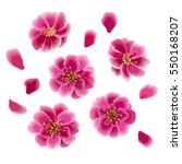cherry blossom. japan sakura... | Shutterstock .eps vector #550168207