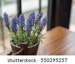 Lavender Flowers In Pot.