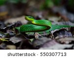 Green Mamba Snake On Ground In...
