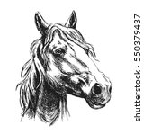 hand sketch horse head. vector... | Shutterstock .eps vector #550379437