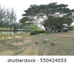 duck of garden | Shutterstock . vector #550424053