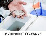 Male Hands Holding A Bait For...