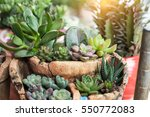 Miniature Succulent Plants In ...