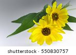 Close View Of Two Arnica Herba...