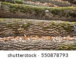 wooden logs | Shutterstock . vector #550878793