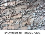 background  texture wall from... | Shutterstock . vector #550927303