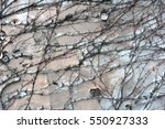 background  texture wall from... | Shutterstock . vector #550927333