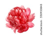 flower rare salmon colored... | Shutterstock . vector #550933843
