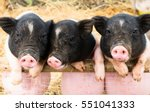 the three little pigs standing...
