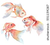 set of gold fishes. watercolor... | Shutterstock . vector #551159287