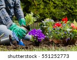 Planting Flowers In The Garden...