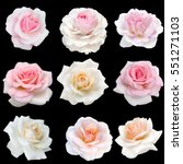 Stock photo collage of delicate pink roses isolated on black background 551271103