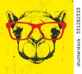 portrait of camel with glasses. ... | Shutterstock .eps vector #551282533