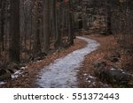 Icy Path In The Forest