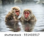 Two Japanese Macaques Sitting...