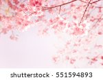 beautiful vintage sakura flower ...   Shutterstock . vector #551594893