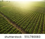 aerial view of field growing... | Shutterstock . vector #551780083