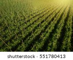 aerial view of field growing... | Shutterstock . vector #551780413