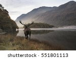 beautiful red deer stag looks... | Shutterstock . vector #551801113