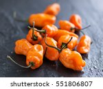 pile of spicy habanero peppers | Shutterstock . vector #551806807