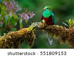 Stock photo resplendent quetzal pharomachrus mocinno savegre in costa rica with green forest in background 551809153