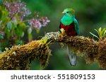 Resplendent quetzal ...