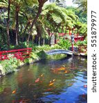 Lovely Pond With Goldfish. The...