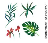 tropical hawaii leaves palm...   Shutterstock . vector #551920597