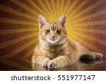 ginger cat portrait on abstract ... | Shutterstock . vector #551977147