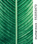 details of big green leaf ... | Shutterstock . vector #552053473