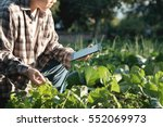 Agronomist Using A Tablet For...