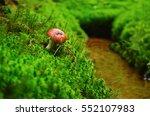 Red Mushroom On Beautiful Gree...
