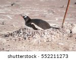 wild penguins resting by the... | Shutterstock . vector #552211273