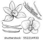 hand drawn sketch vector... | Shutterstock .eps vector #552214933