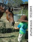Little boy feeding horse - stock photo
