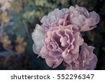 pink roses on a natural... | Shutterstock . vector #552296347