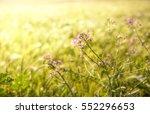 flowers in the garden  pink... | Shutterstock . vector #552296653
